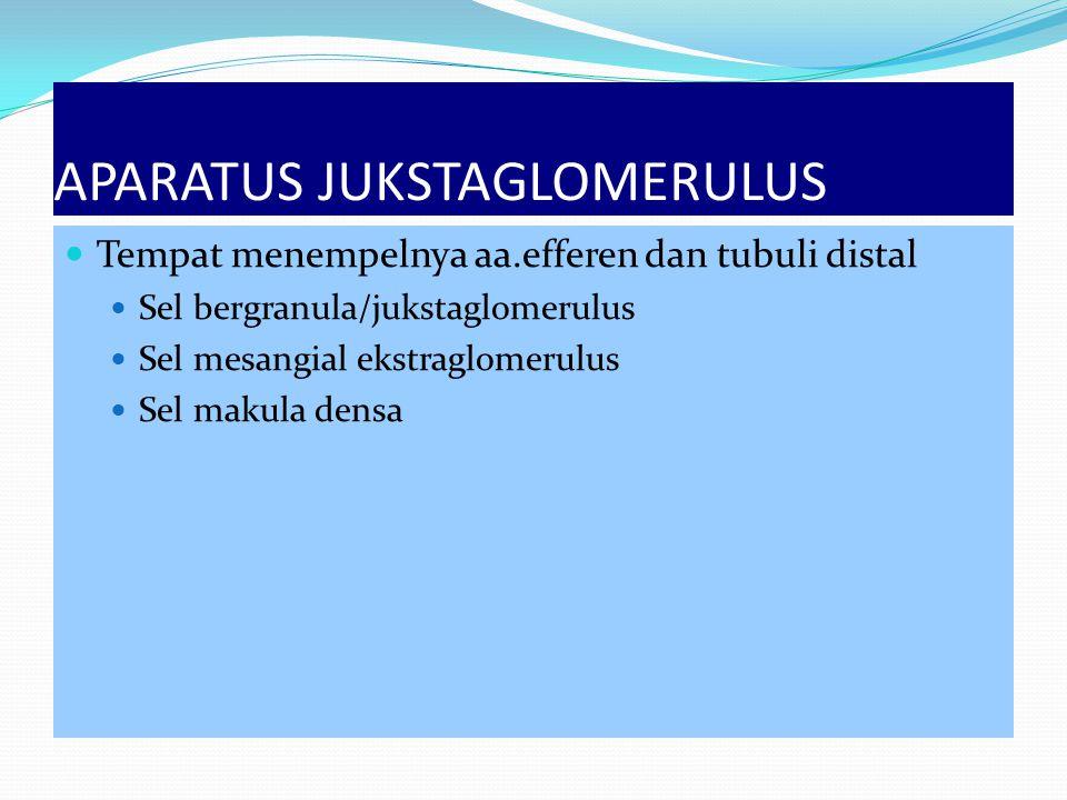 APARATUS JUKSTAGLOMERULUS