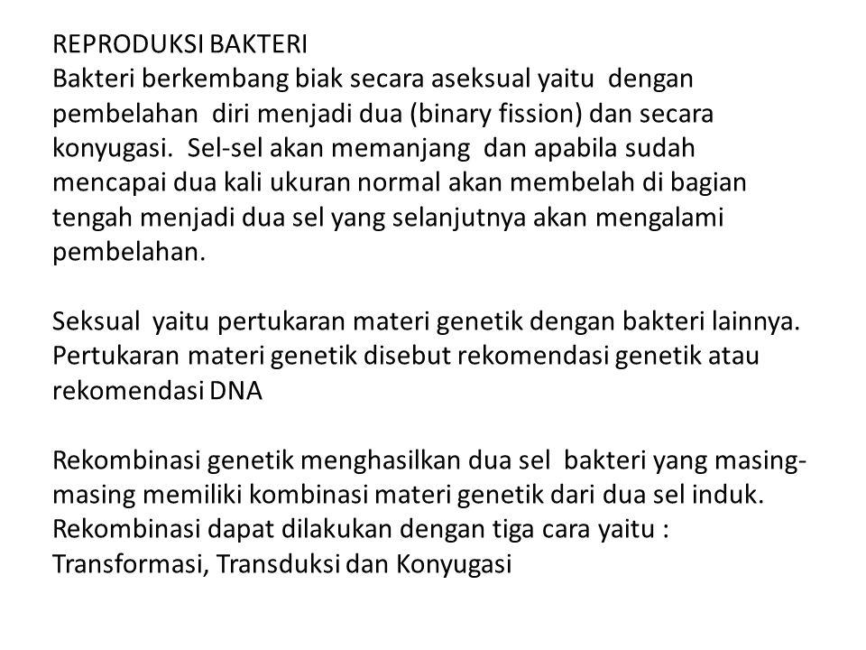 REPRODUKSI BAKTERI Bakteri berkembang biak secara aseksual yaitu dengan pembelahan diri menjadi dua (binary fission) dan secara konyugasi.