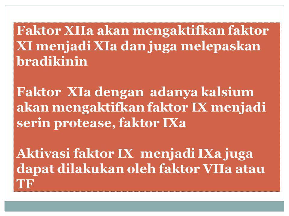 Faktor XIIa akan mengaktifkan faktor XI menjadi XIa dan juga melepaskan bradikinin