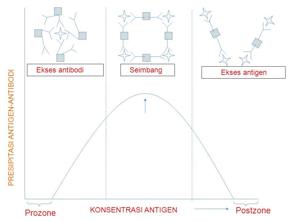 Postzone Prozone Ekses antibodi Seimbang Ekses antigen