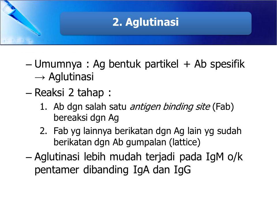 Umumnya : Ag bentuk partikel + Ab spesifik → Aglutinasi