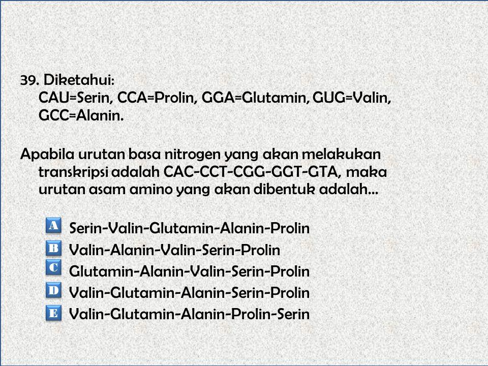 39. Diketahui: CAU=Serin, CCA=Prolin, GGA=Glutamin, GUG=Valin, GCC=Alanin. Apabila urutan basa nitrogen yang akan melakukan transkripsi adalah CAC-CCT-CGG-GGT-GTA, maka urutan asam amino yang akan dibentuk adalah... Serin-Valin-Glutamin-Alanin-Prolin Valin-Alanin-Valin-Serin-Prolin Glutamin-Alanin-Valin-Serin-Prolin Valin-Glutamin-Alanin-Serin-Prolin Valin-Glutamin-Alanin-Prolin-Serin