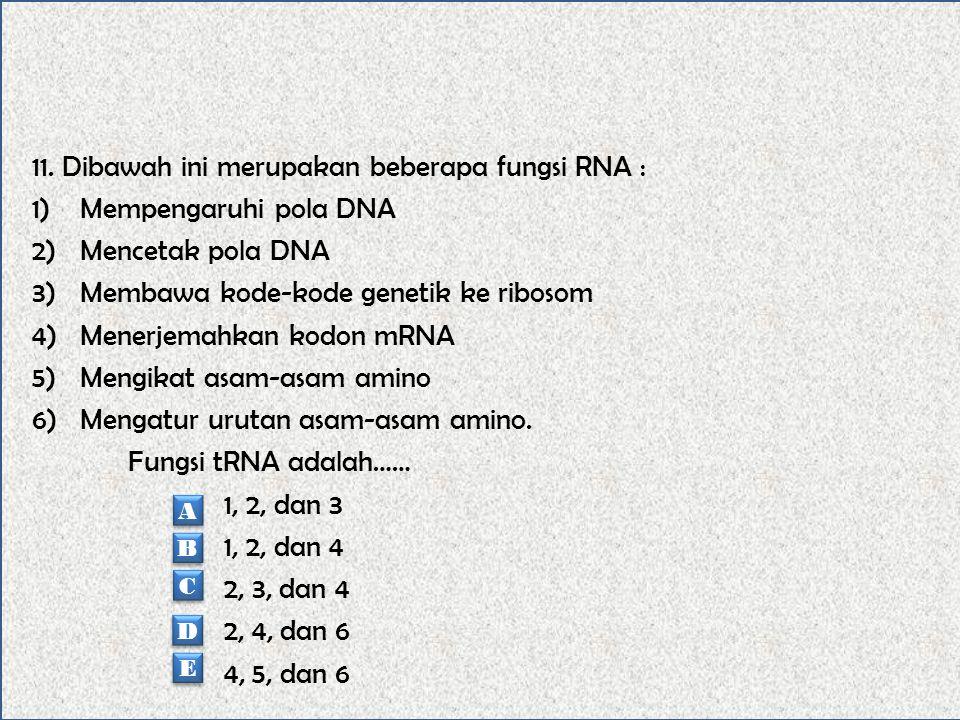 11. Dibawah ini merupakan beberapa fungsi RNA : Mempengaruhi pola DNA