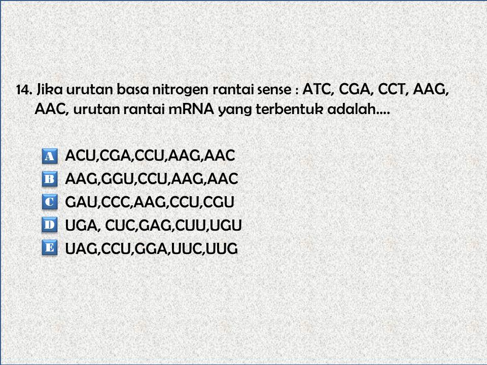 14. Jika urutan basa nitrogen rantai sense : ATC, CGA, CCT, AAG, AAC, urutan rantai mRNA yang terbentuk adalah…. ACU,CGA,CCU,AAG,AAC AAG,GGU,CCU,AAG,AAC GAU,CCC,AAG,CCU,CGU UGA, CUC,GAG,CUU,UGU UAG,CCU,GGA,UUC,UUG