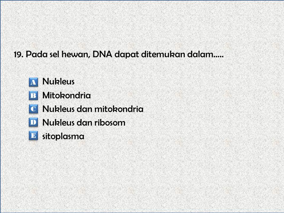 19. Pada sel hewan, DNA dapat ditemukan dalam…