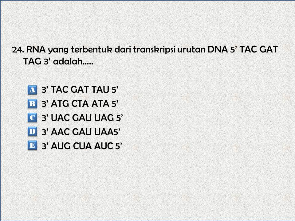 24. RNA yang terbentuk dari transkripsi urutan DNA 5' TAC GAT TAG 3' adalah….. 3' TAC GAT TAU 5' 3' ATG CTA ATA 5' 3' UAC GAU UAG 5' 3' AAC GAU UAA5' 3' AUG CUA AUC 5'
