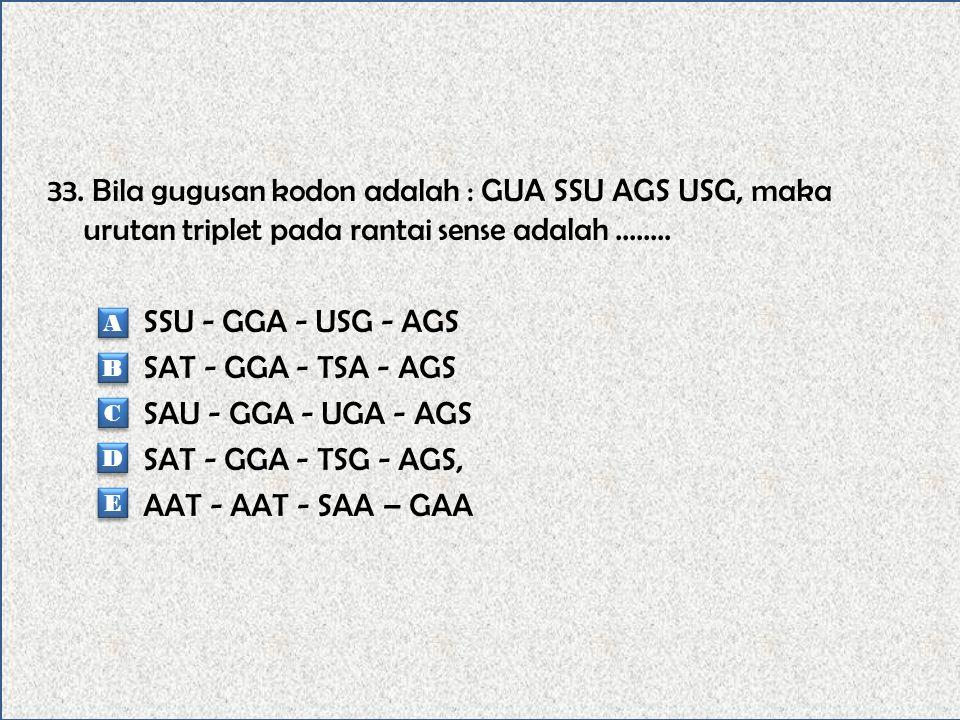 33. Bila gugusan kodon adalah : GUA SSU AGS USG, maka urutan triplet pada rantai sense adalah ........ SSU - GGA - USG - AGS SAT - GGA - TSA - AGS SAU - GGA - UGA - AGS SAT - GGA - TSG - AGS, AAT - AAT - SAA – GAA