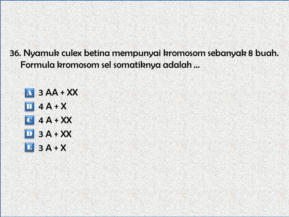 36. Nyamuk culex betina mempunyai kromosom sebanyak 8 buah