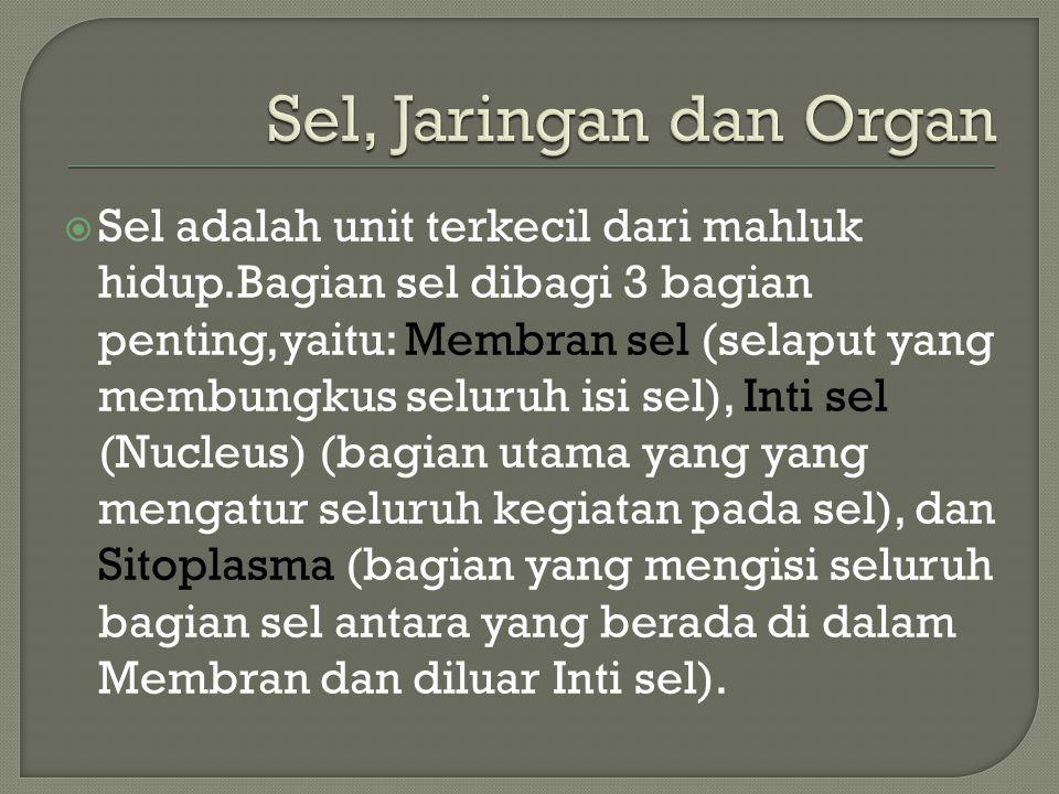 Sel, Jaringan dan Organ