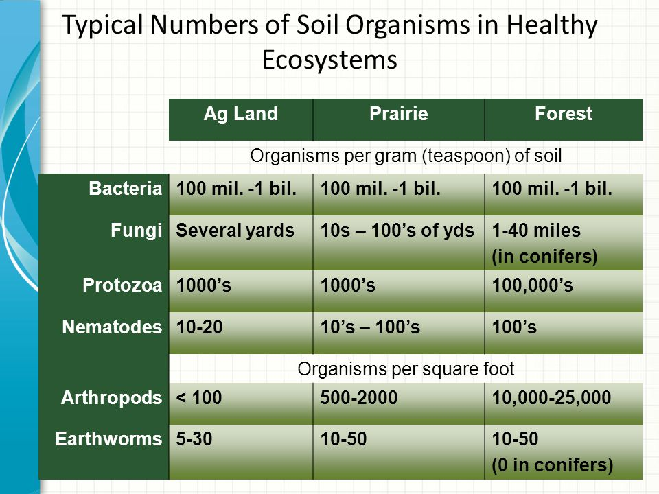 Typical Numbers of Soil Organisms in Healthy Ecosystems