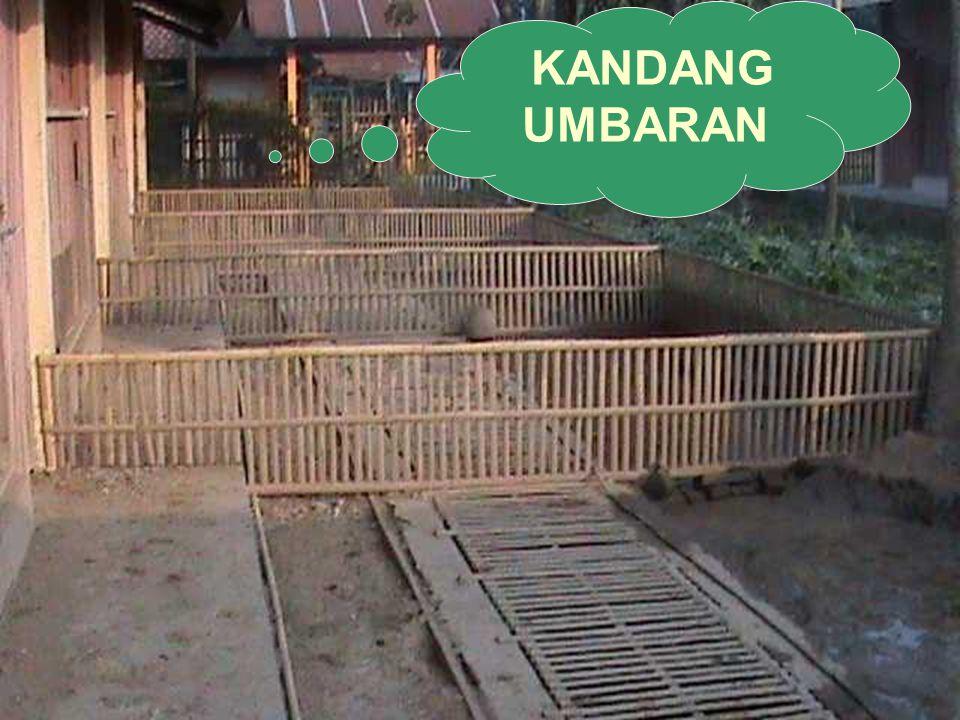 KANDANG UMBARAN