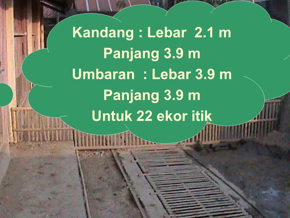 Kandang : Lebar 2.1 m Panjang 3.9 m Umbaran : Lebar 3.9 m Untuk 22 ekor itik