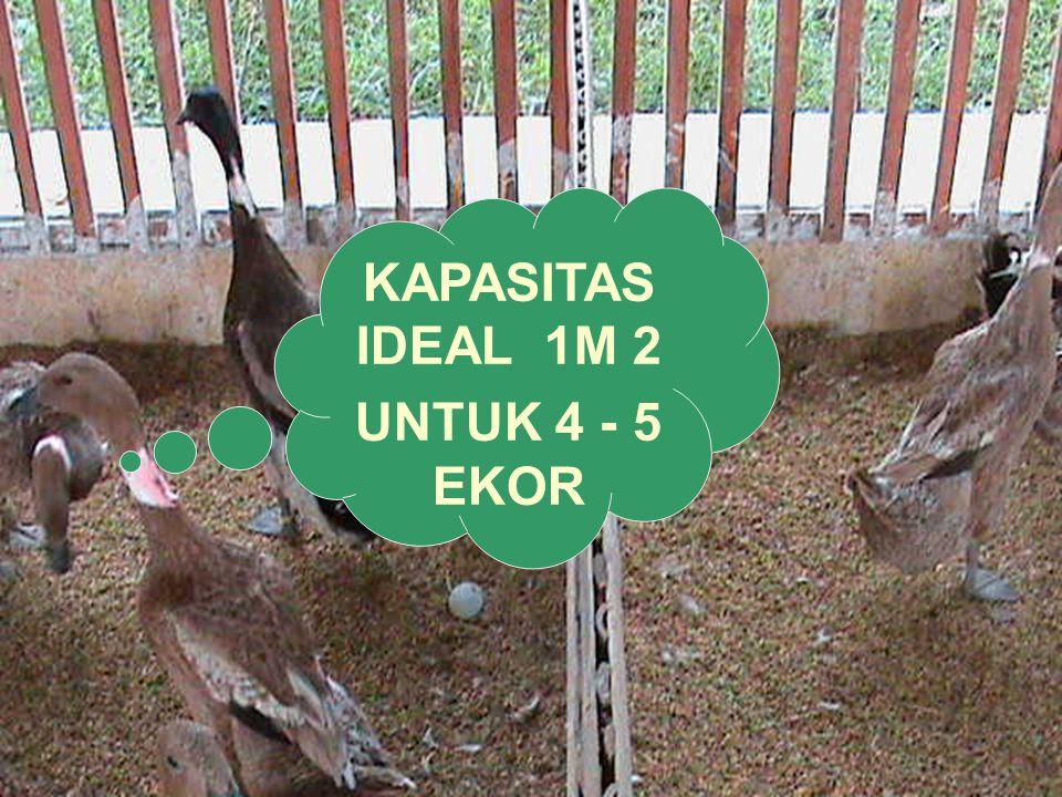 KAPASITAS IDEAL 1M 2 UNTUK 4 - 5 EKOR