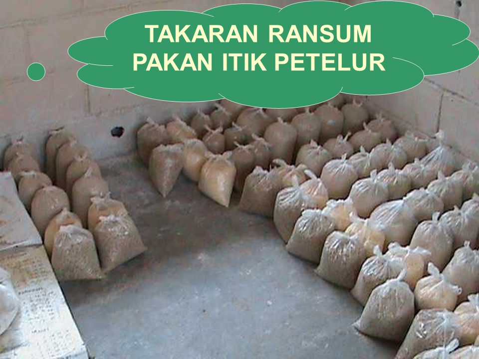 TAKARAN RANSUM PAKAN ITIK PETELUR