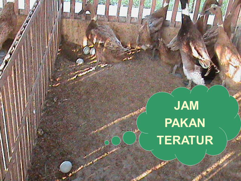 JAM PAKAN TERATUR