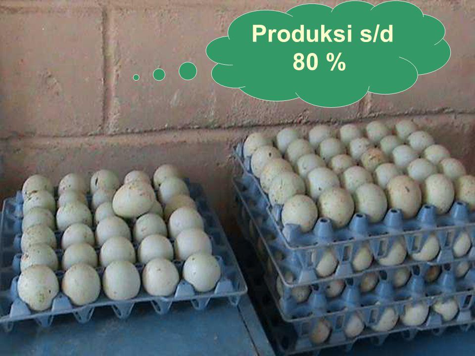 Produksi s/d 80 %