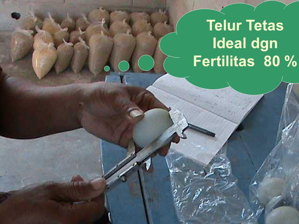 Telur Tetas Ideal dgn Fertilitas 80 %