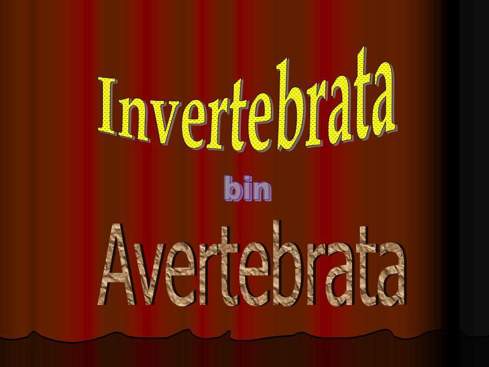 Invertebrata bin Avertebrata