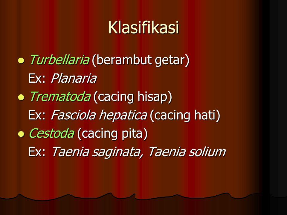 Klasifikasi Turbellaria (berambut getar) Ex: Planaria