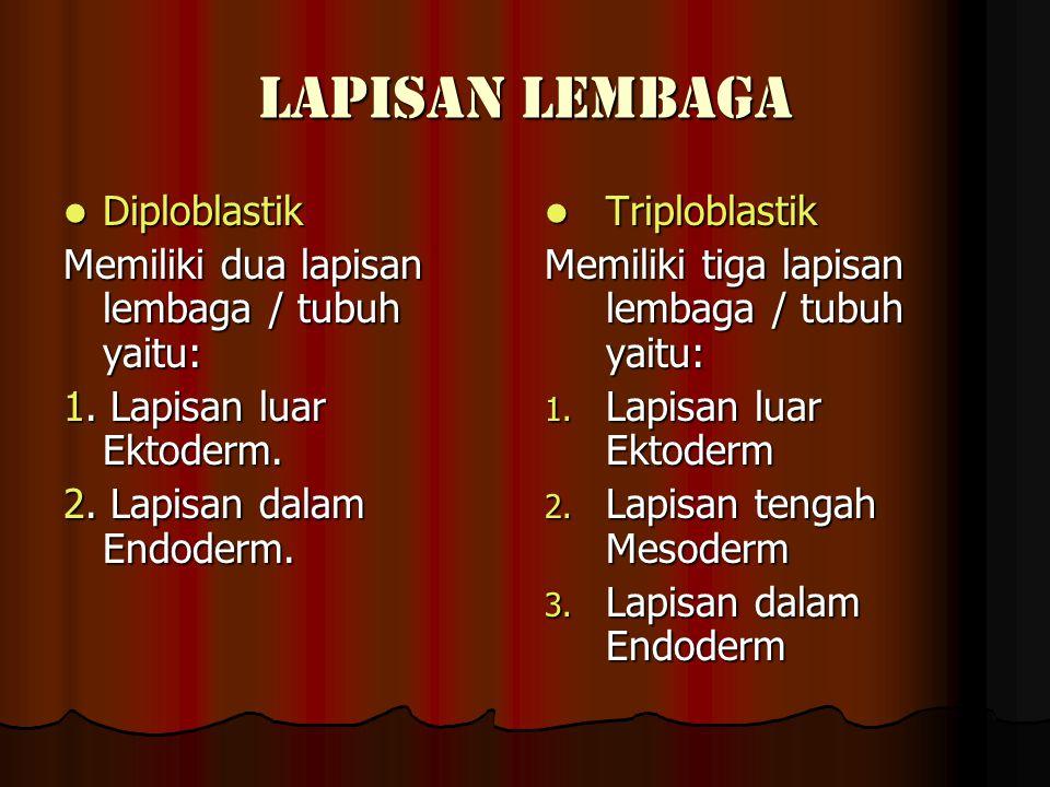 LAPISAN LEMBAGA Diploblastik