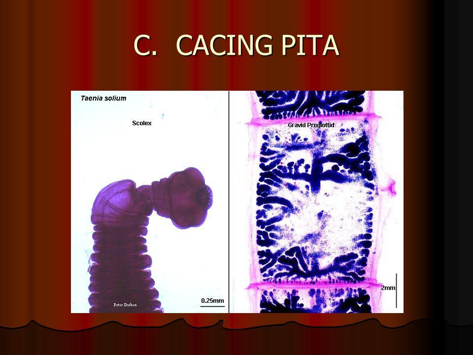 C. CACING PITA