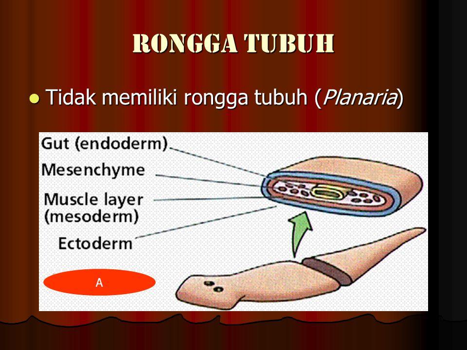 RONGGA TUBUH Tidak memiliki rongga tubuh (Planaria) A