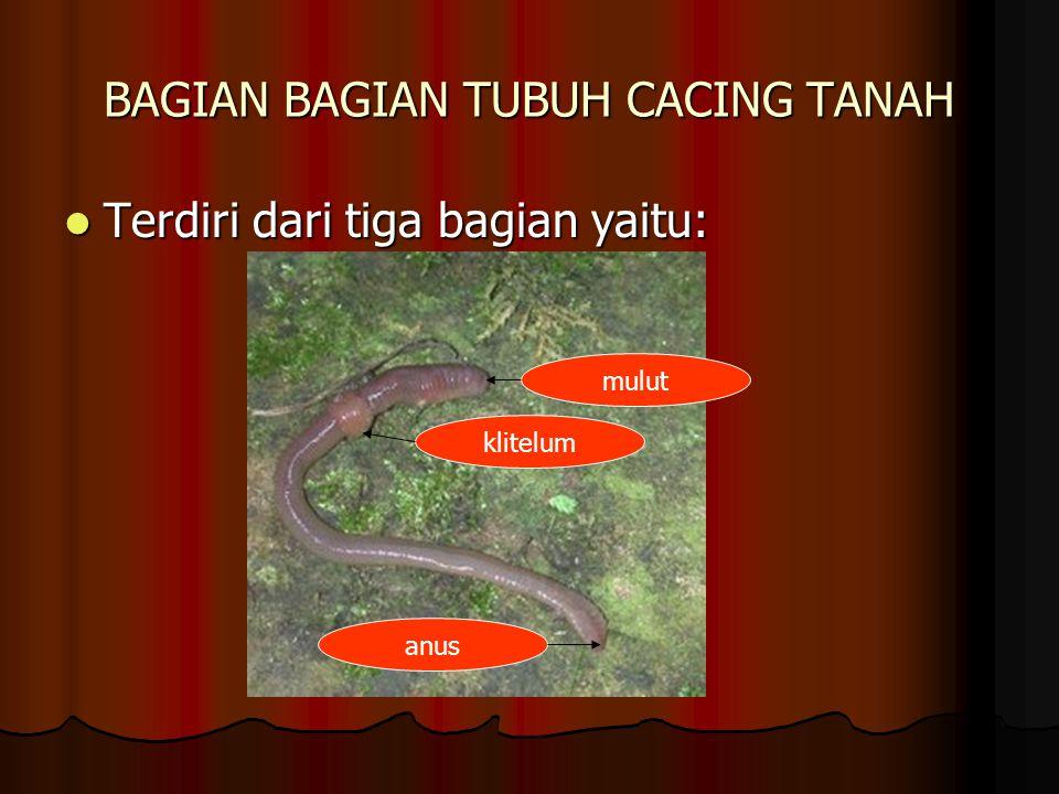 BAGIAN BAGIAN TUBUH CACING TANAH