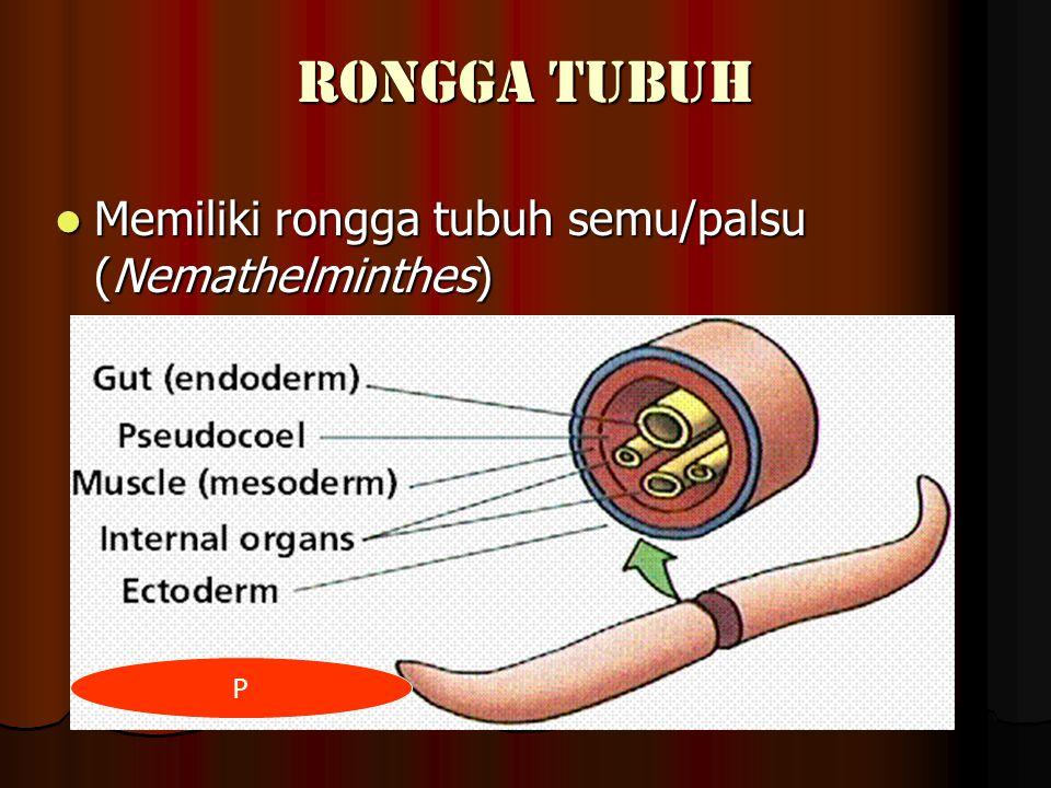 RONGGA TUBUH Memiliki rongga tubuh semu/palsu (Nemathelminthes) P