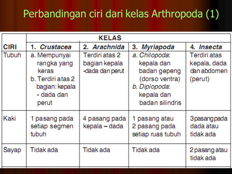Perbandingan ciri dari kelas Arthropoda (1)