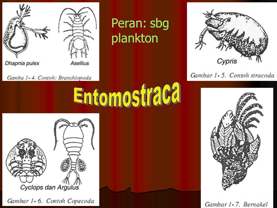 Peran: sbg plankton Entomostraca
