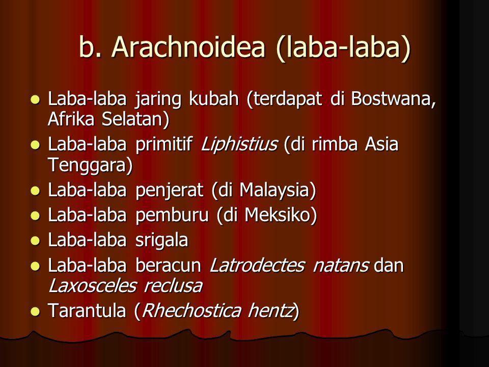 b. Arachnoidea (laba-laba)