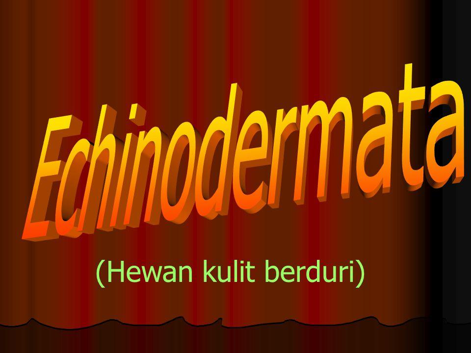Echinodermata (Hewan kulit berduri)