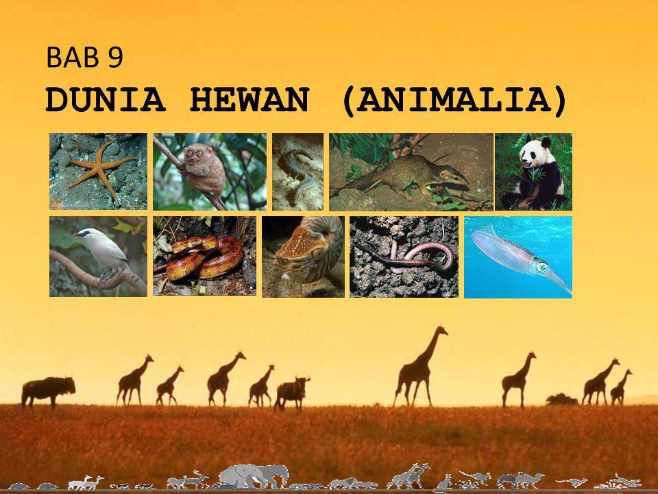 BAB 9 DUNIA HEWAN (ANIMALIA)