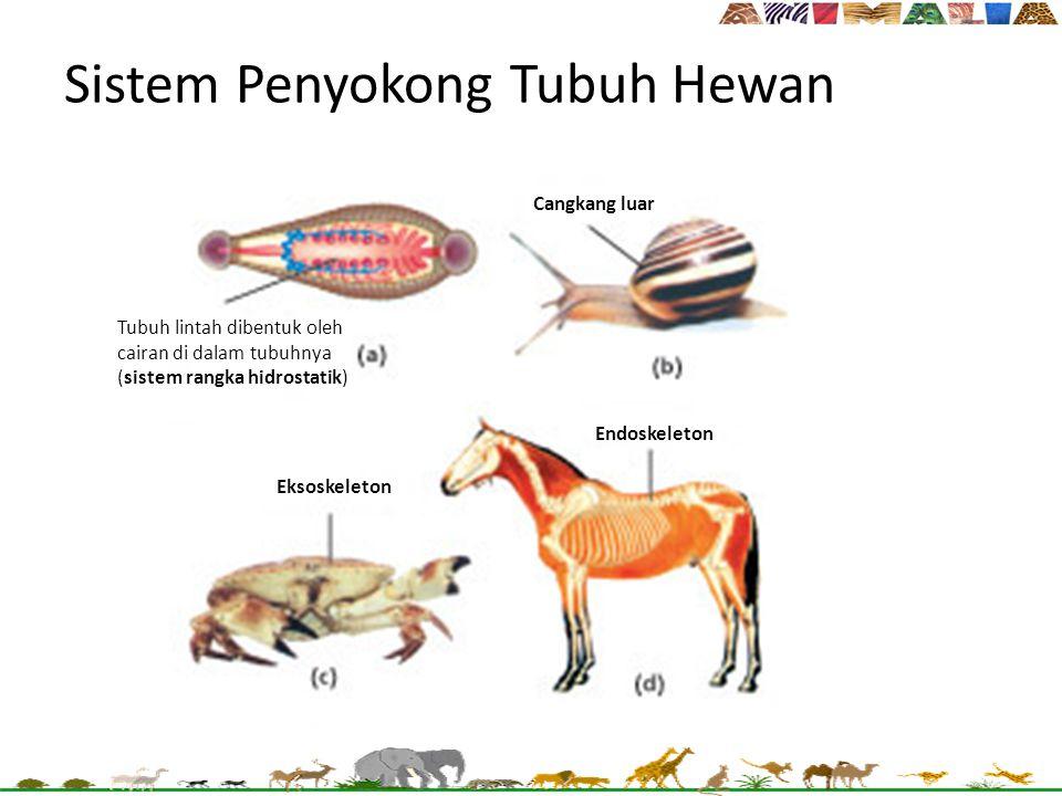 Sistem Penyokong Tubuh Hewan