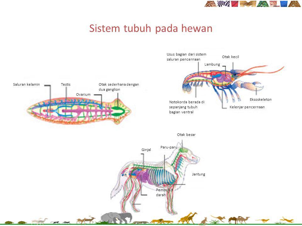 Sistem tubuh pada hewan