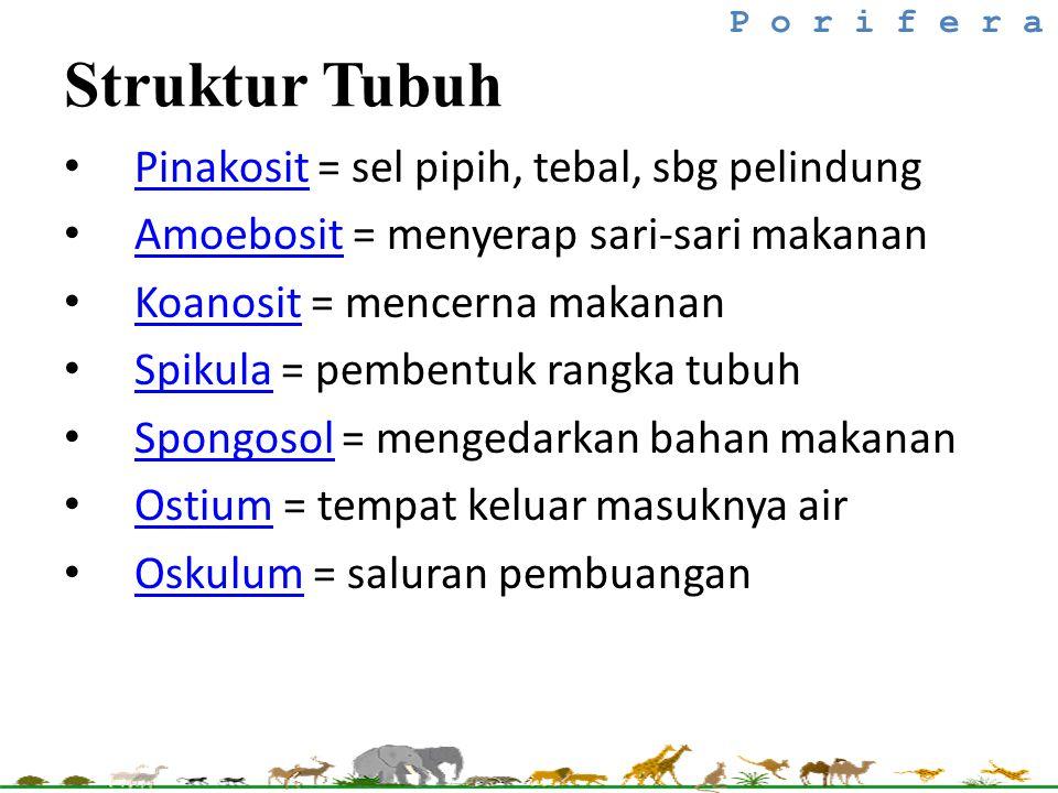 Struktur Tubuh Pinakosit = sel pipih, tebal, sbg pelindung