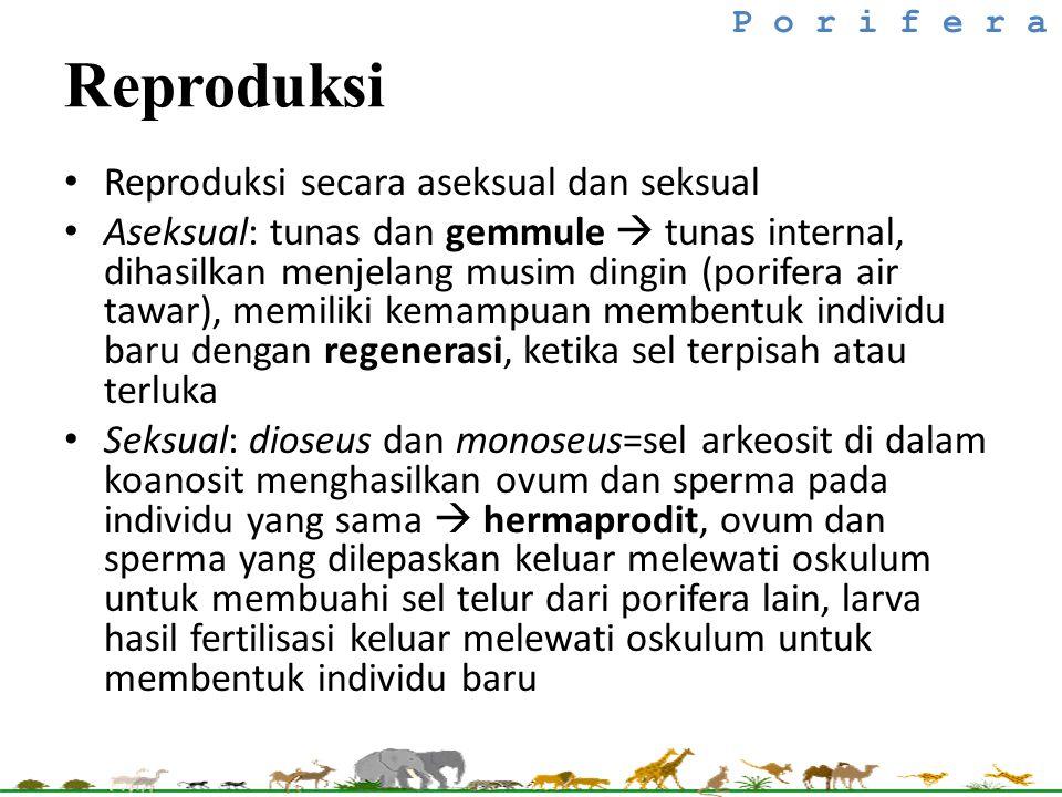 Reproduksi Reproduksi secara aseksual dan seksual