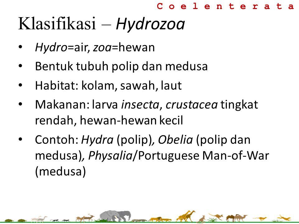 Klasifikasi – Hydrozoa