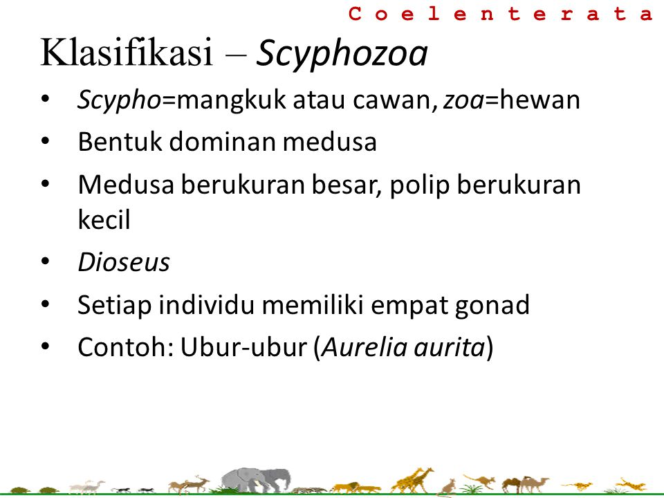 Klasifikasi – Scyphozoa