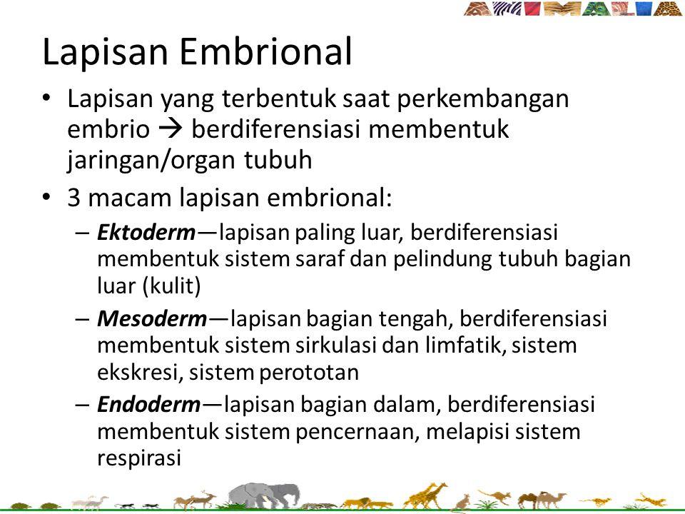 Lapisan Embrional Lapisan yang terbentuk saat perkembangan embrio  berdiferensiasi membentuk jaringan/organ tubuh.