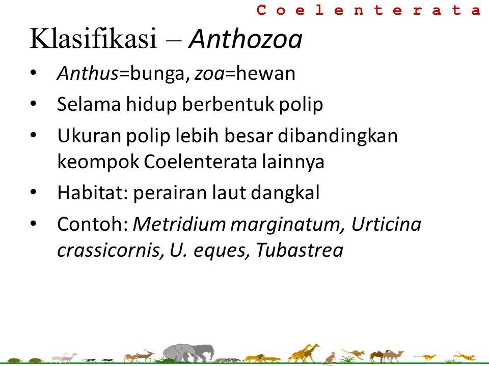Klasifikasi – Anthozoa