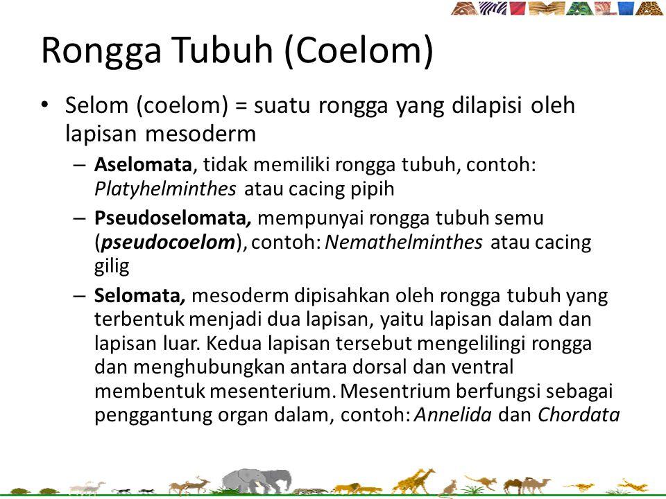 Rongga Tubuh (Coelom) Selom (coelom) = suatu rongga yang dilapisi oleh lapisan mesoderm.
