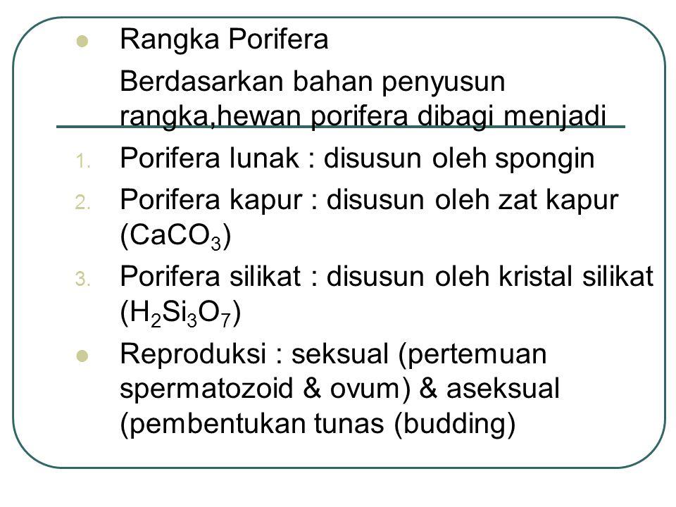 Rangka Porifera Berdasarkan bahan penyusun rangka,hewan porifera dibagi menjadi. Porifera lunak : disusun oleh spongin.