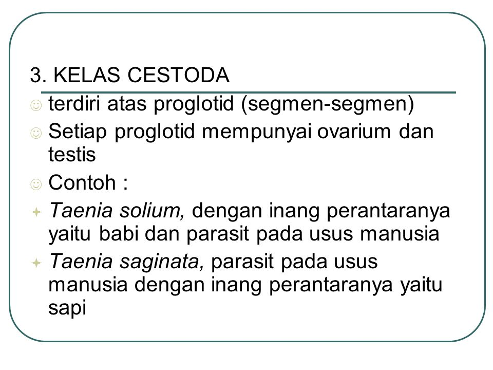 3. KELAS CESTODA terdiri atas proglotid (segmen-segmen) Setiap proglotid mempunyai ovarium dan testis.