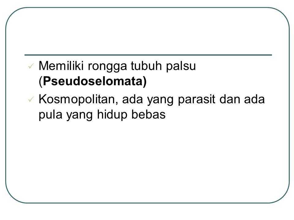 Memiliki rongga tubuh palsu (Pseudoselomata)