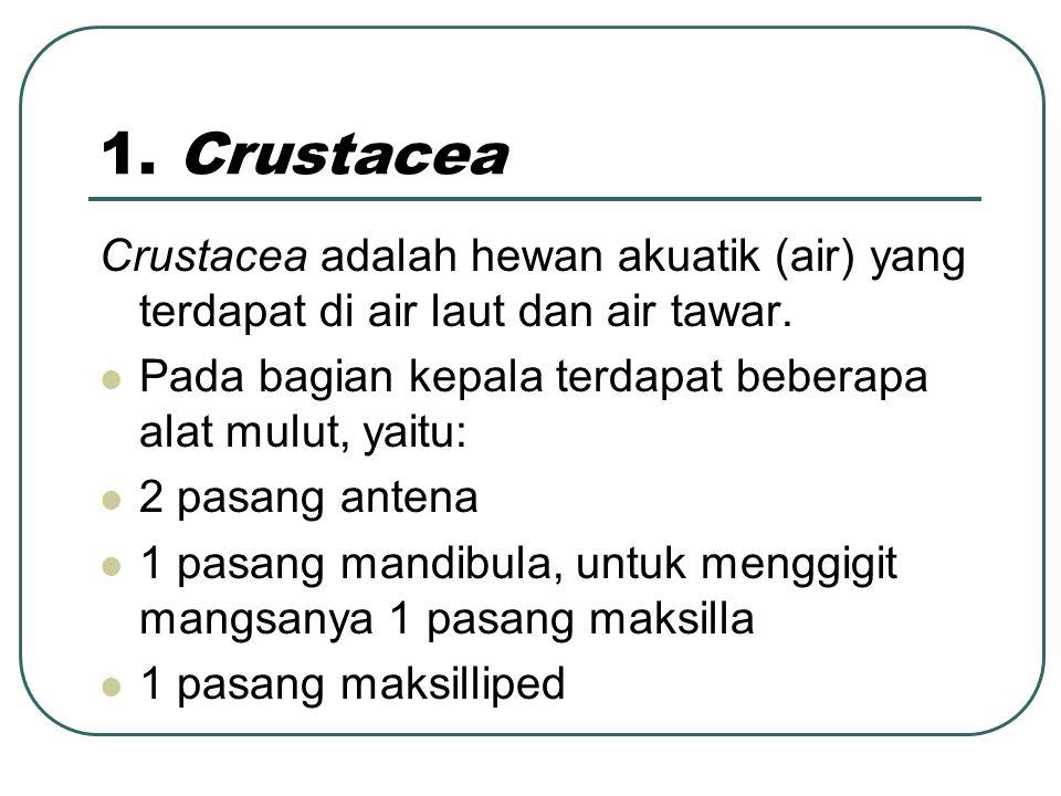 1. Crustacea Crustacea adalah hewan akuatik (air) yang terdapat di air laut dan air tawar. Pada bagian kepala terdapat beberapa alat mulut, yaitu: