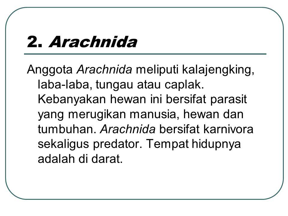 2. Arachnida
