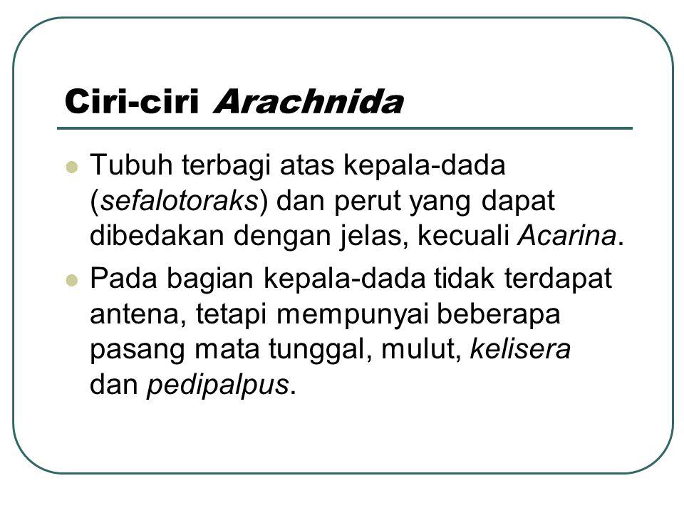 Ciri-ciri Arachnida Tubuh terbagi atas kepala-dada (sefalotoraks) dan perut yang dapat dibedakan dengan jelas, kecuali Acarina.
