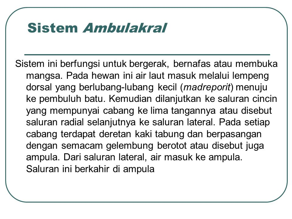 Sistem Ambulakral