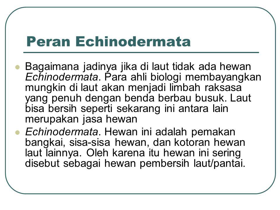 Peran Echinodermata